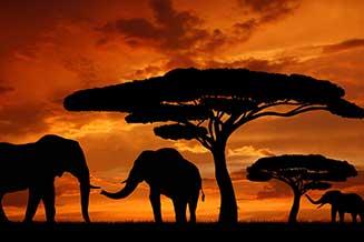 Afrika Nakliye